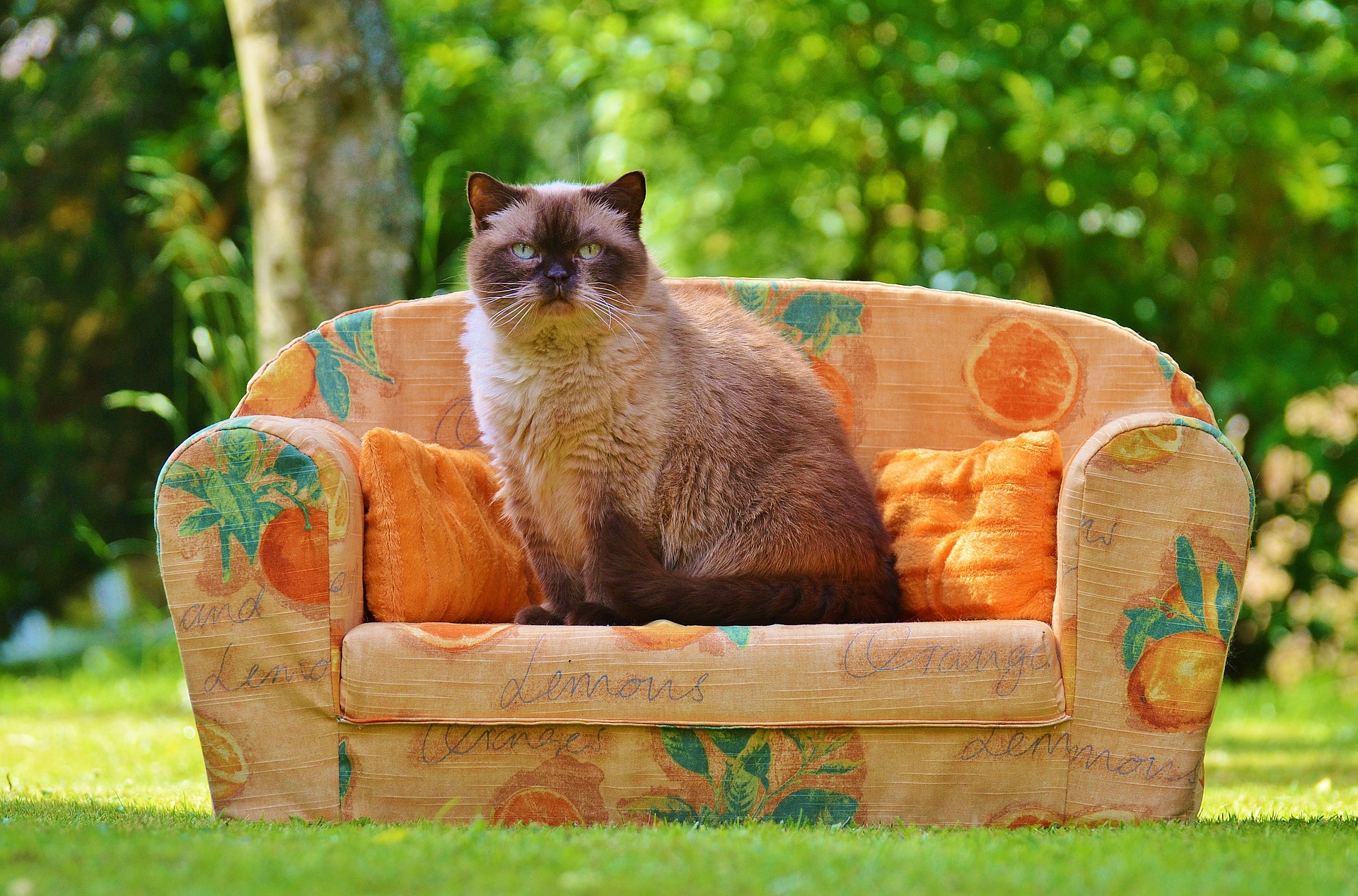 Best cat food for british shorthairs