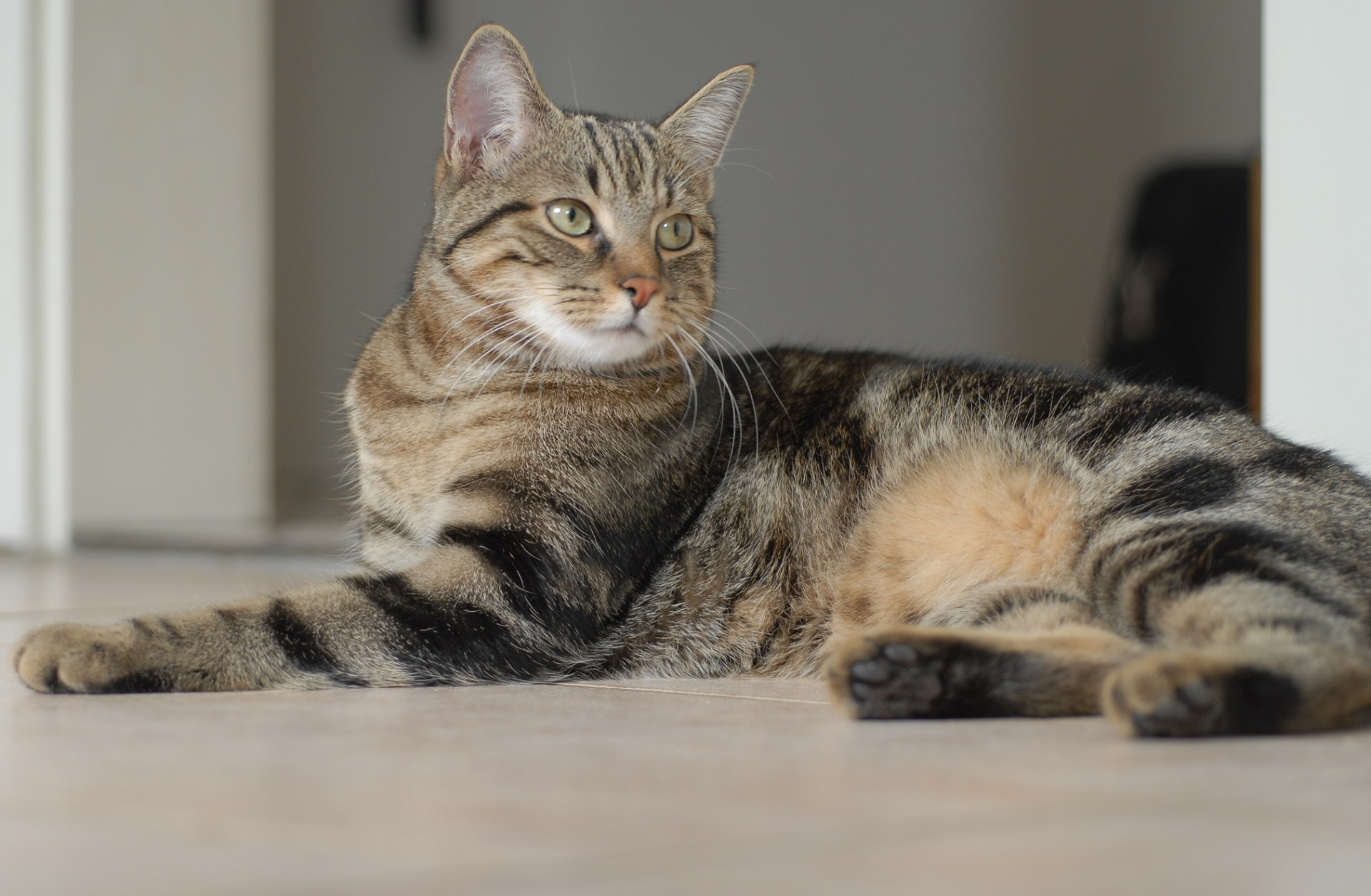 Best cat food for Egyptian Mau
