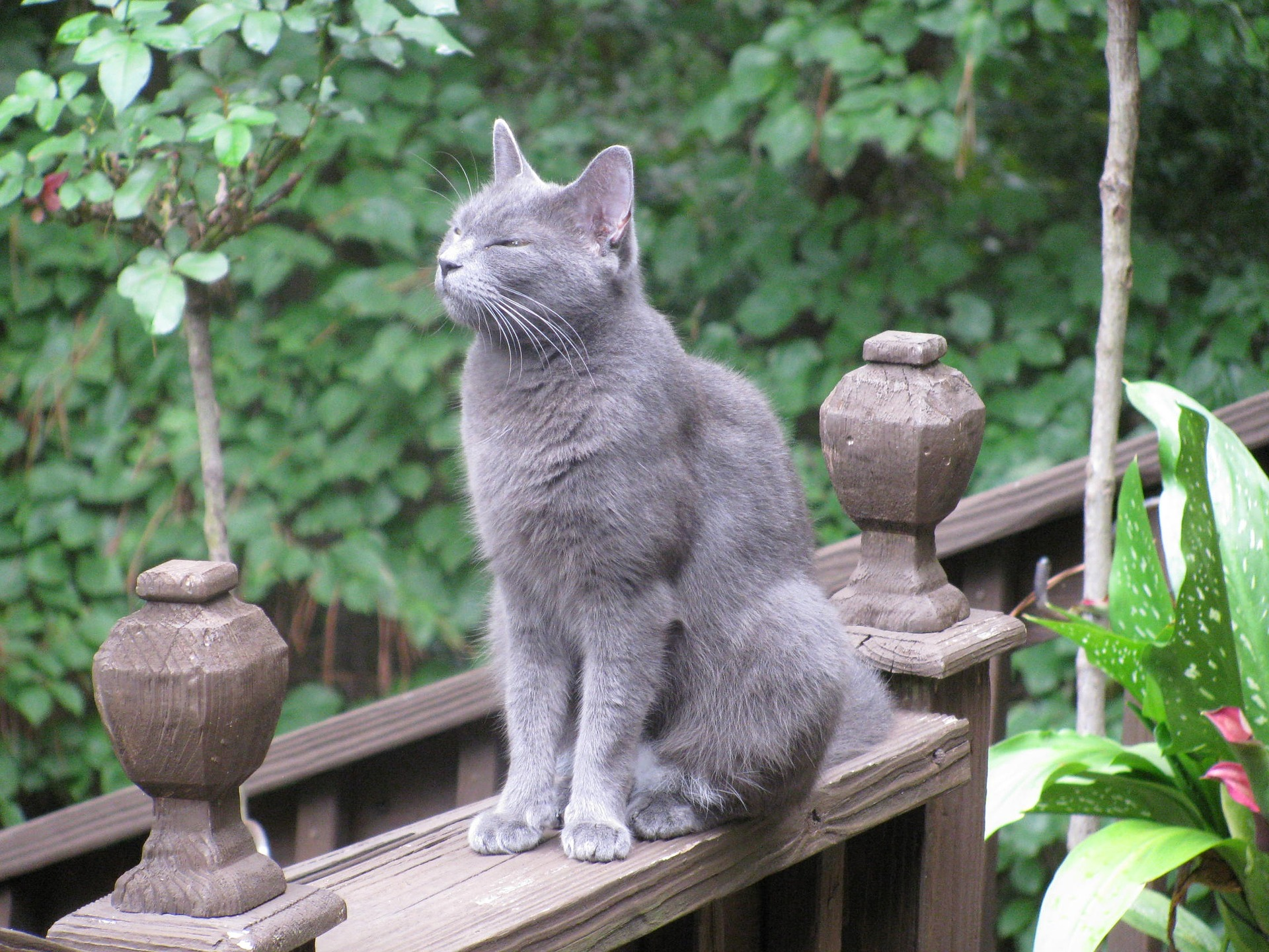 best cat food for russian blue