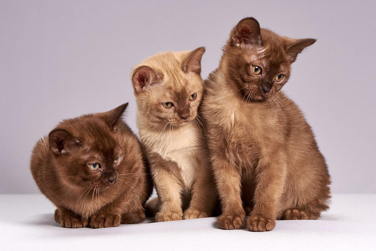 cats poop smells horrible