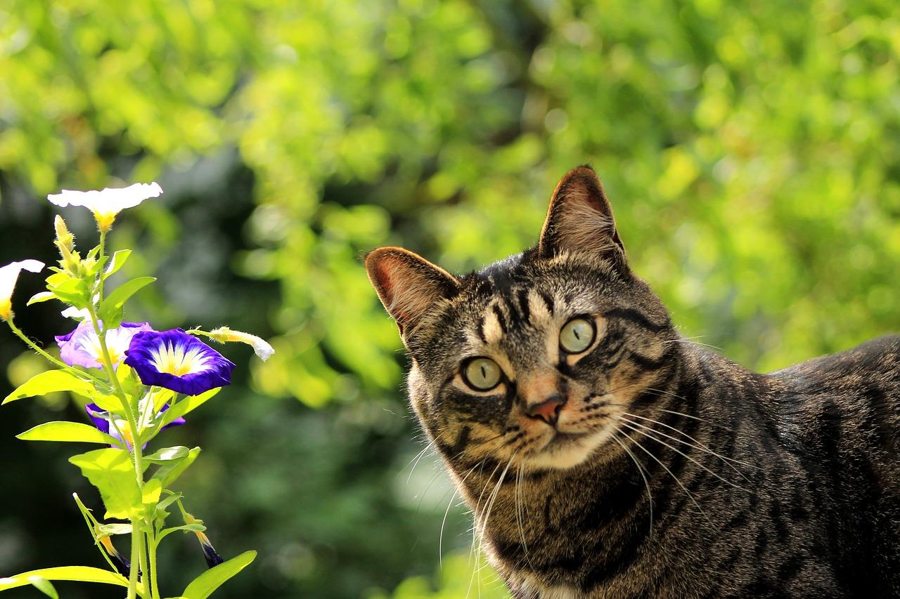 holistic cat diet benefits